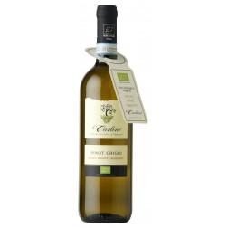 Pinot Grigio DOC Venezia senza solfiti aggiunti